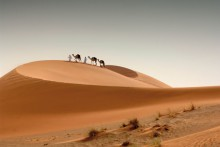 Camels.© Abu Dhabi Tourism & Culture Authority